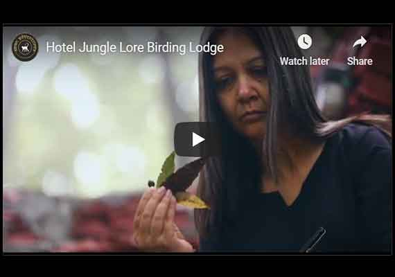 junglelore Birding lodge video